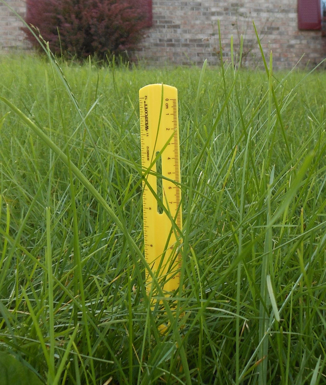 Ruler in the grass
